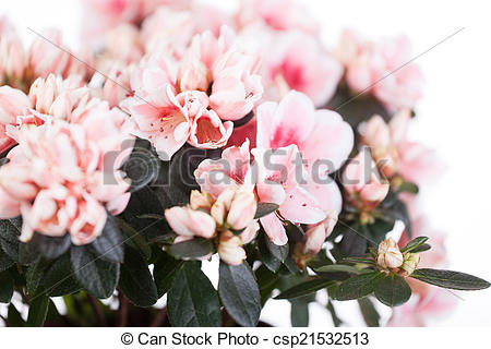 Stock Photography of Blossoming cream.