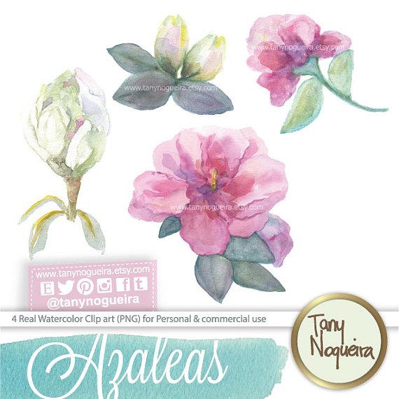 Azalea flowers clip art images watercolor hand painted PNG.