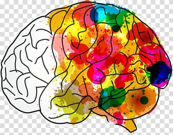 Human brain Creativity Mind Hacks, Brain Health transparent.