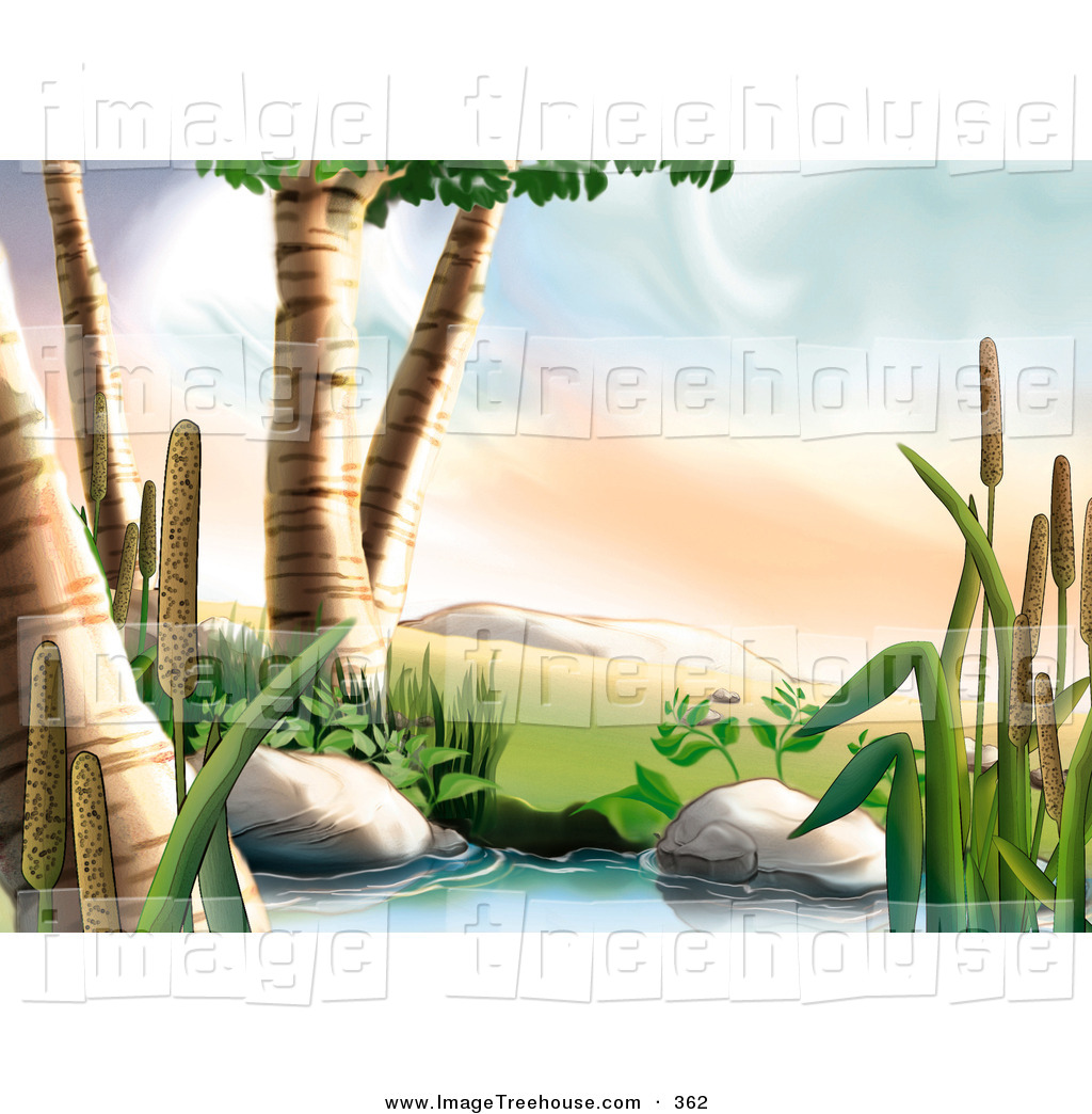 Clipart of Birch Trees and Cattail Plants Next to a Creek by dero.