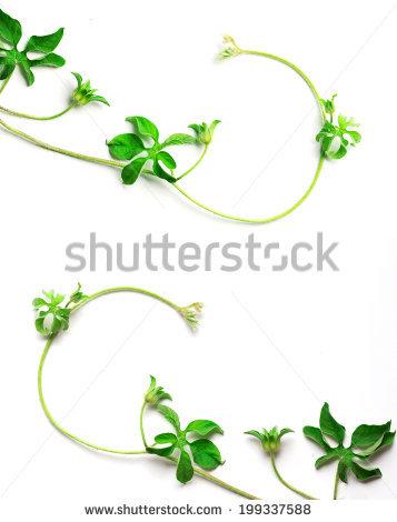 Creeping Plant Stock Photos, Royalty.