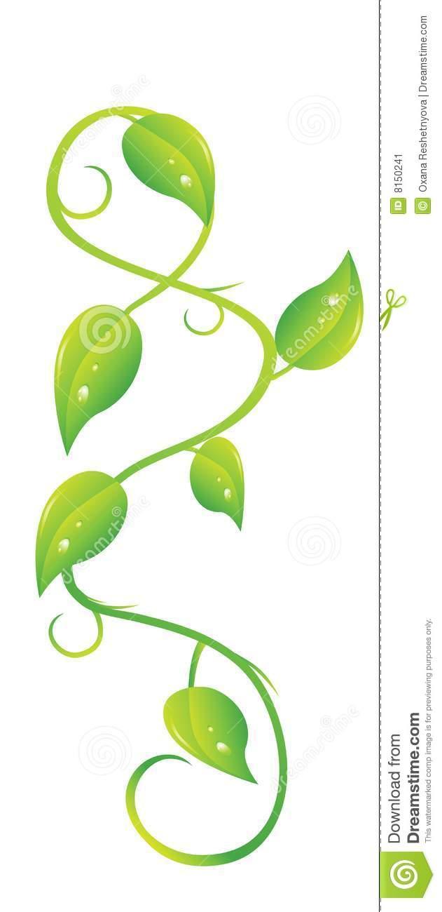 Creeping Plant Stock Image.
