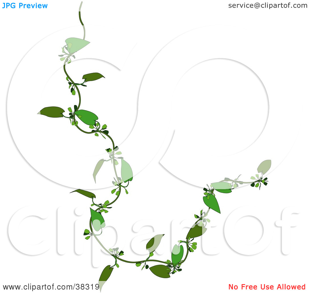 Clipart Illustration of a Curly Green Creeper Plant by dero #38319.