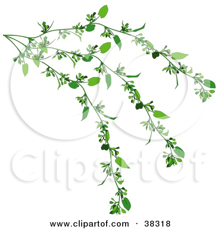 Clipart Illustration of a Lush Green Creeper Plant by dero #38318.