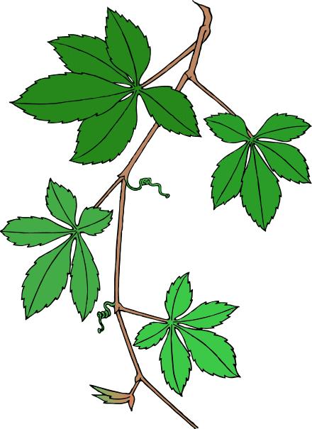 Creeping plants clipart #17