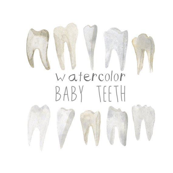 Watercolor Baby Teeth, Teeth Clip Art, Dentist Artwork, Dental.