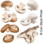 Oyster Illustrations and Clip Art. 2,037 Oyster royalty free.