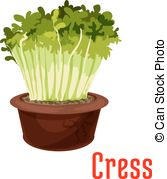 Cress Vector Clipart Illustrations. 47 Cress clip art vector EPS.