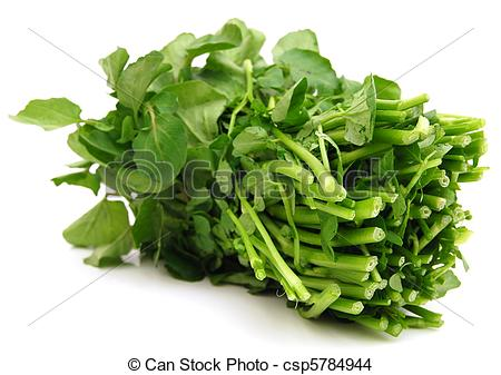 Stock Photo of A green water.
