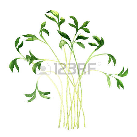59 Cress Stock Illustrations, Cliparts And Royalty Free Cress Vectors.