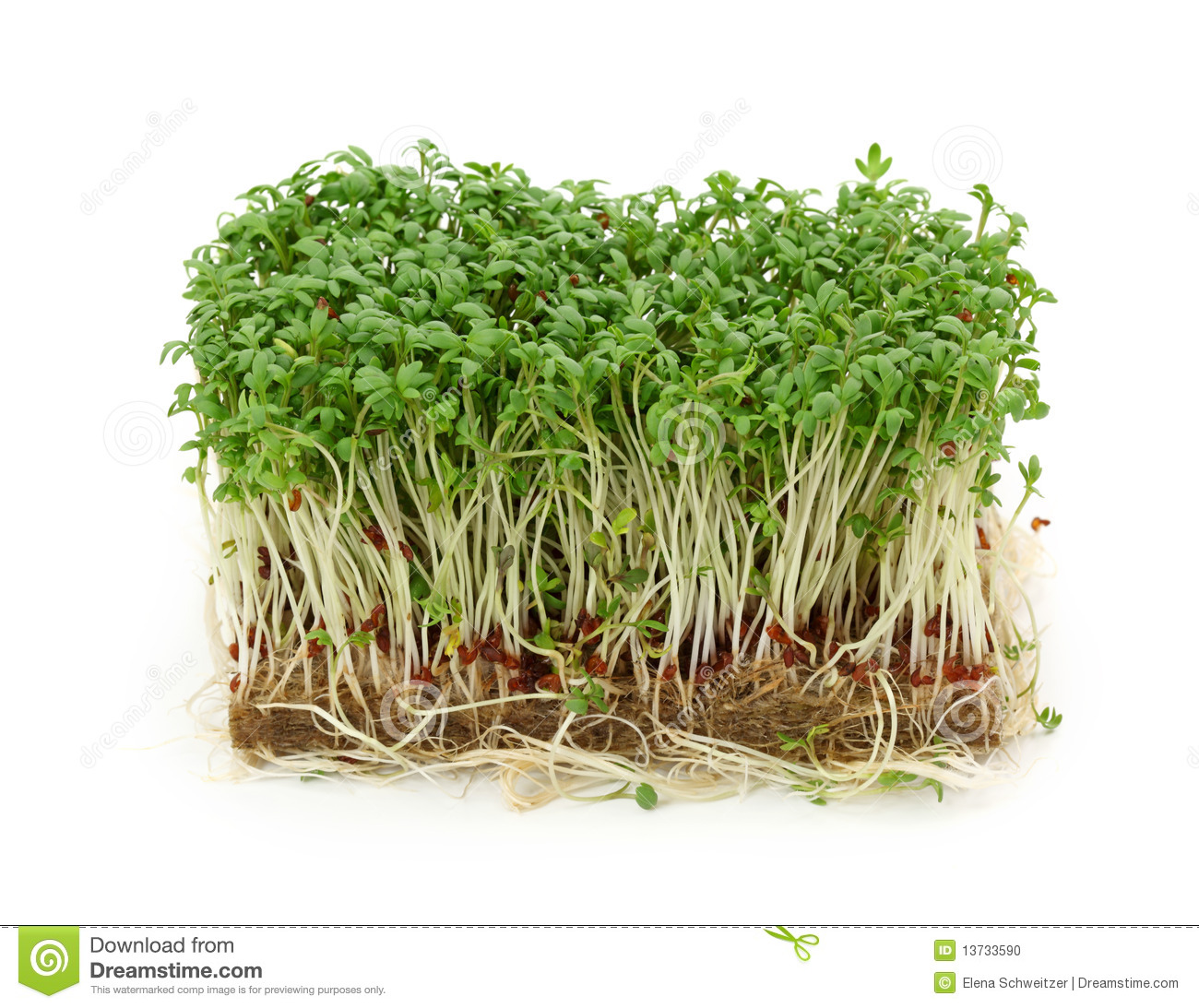 Cress Stock Photos, Images, & Pictures.