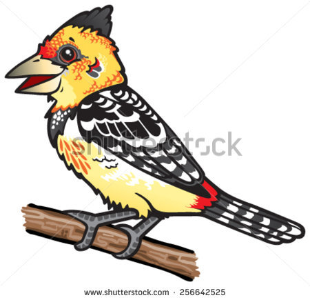 Crested Barbet Stock Photos, Royalty.