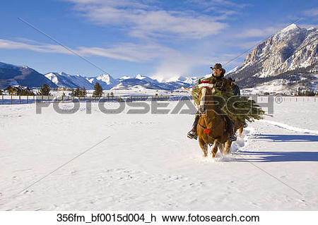 Stock Photo of Couple hauling a Christmas tree on horseback to.