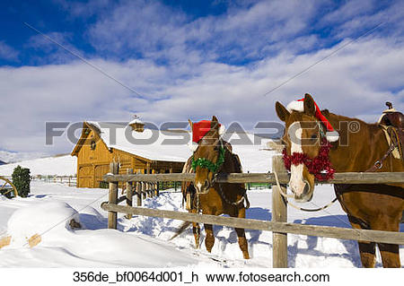 Stock Photo of Corraled horses adorned with Christmas decorations.