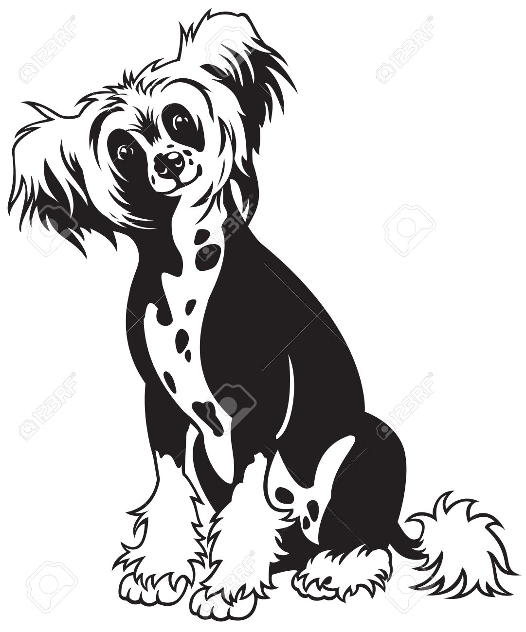 Chinese crested clipart.