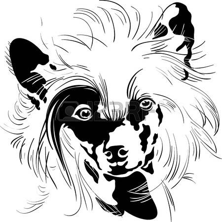 112 Chinese Crested Stock Illustrations, Cliparts And Royalty Free.
