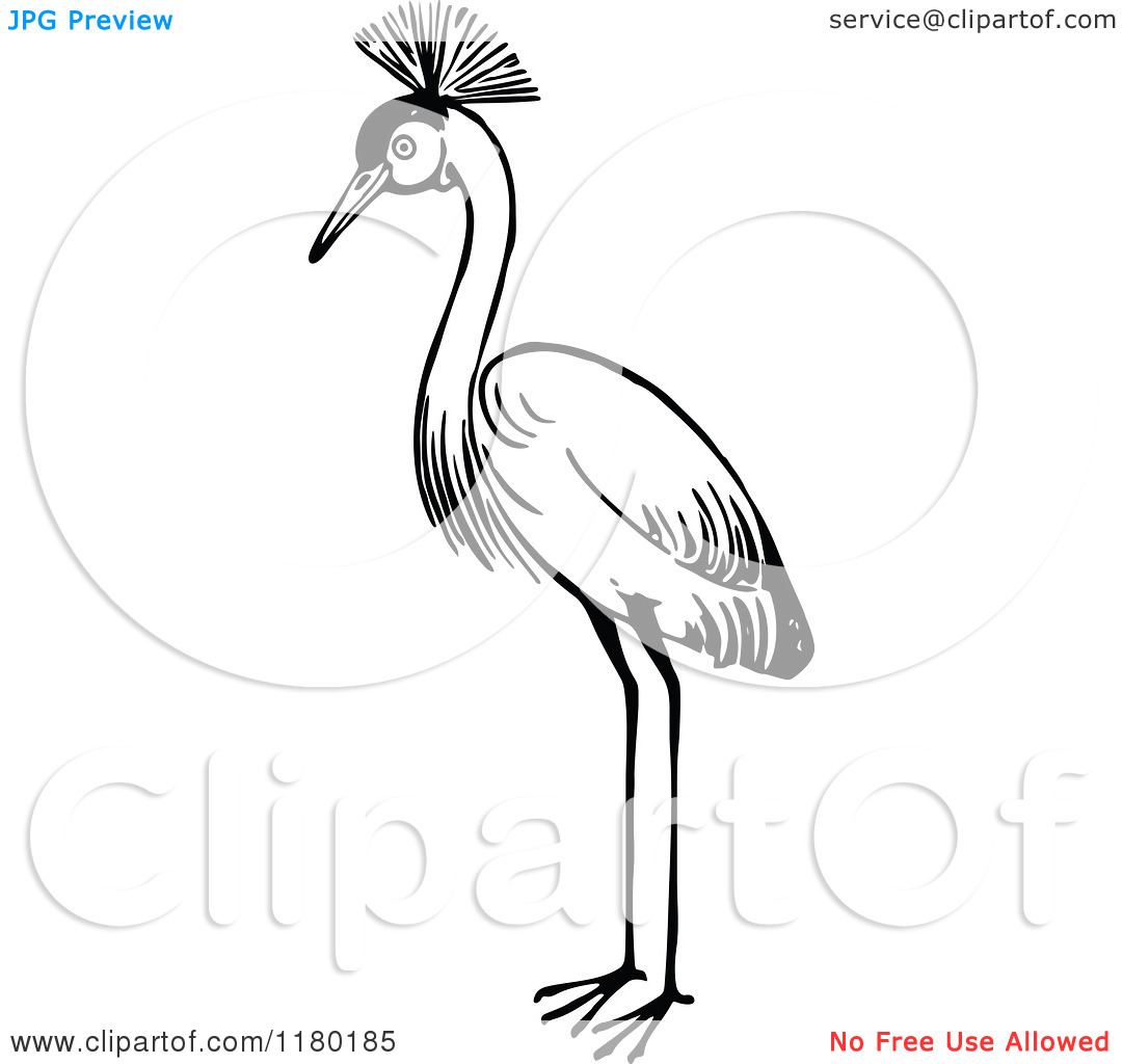 Clipart of a Black and White Crested Crane Bird.