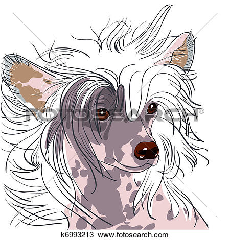 Clipart of vector dog Chinese Crested breed k6993213.