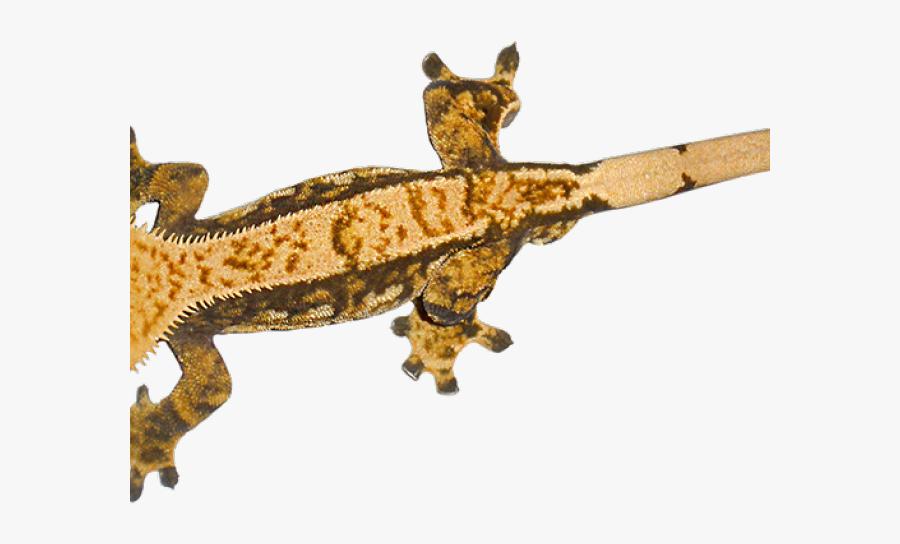 Gecko Clipart Transparent.