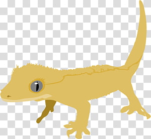 Crested gecko transparent background PNG cliparts free.