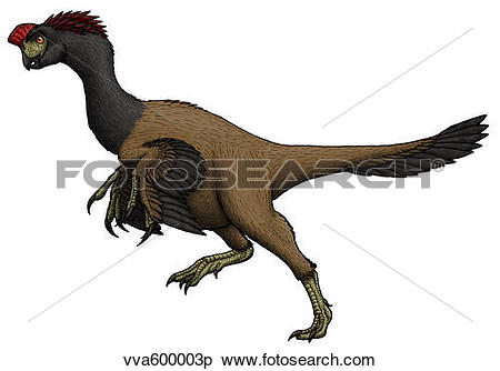 Stock Illustration of Citipati, an oviraptorid from the Cretaceous.