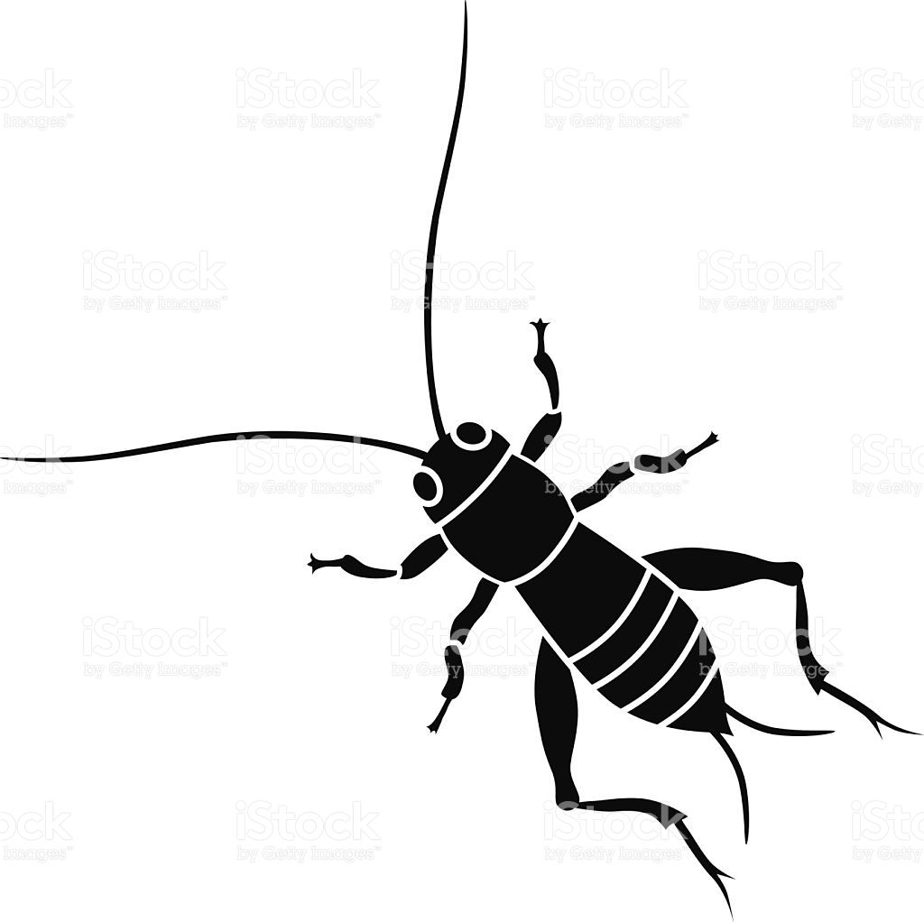 A vector illustration of a cricket insect in black and white.