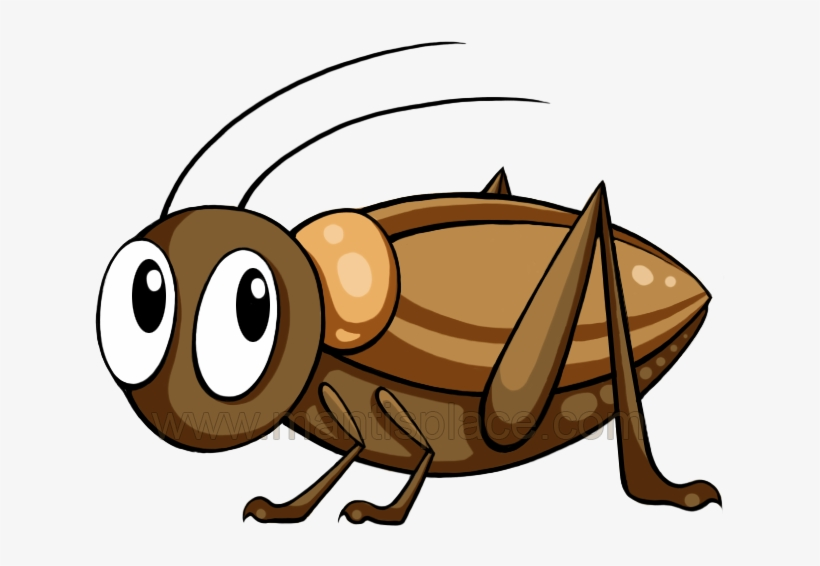 Mantis Clipart Cricket Insect.