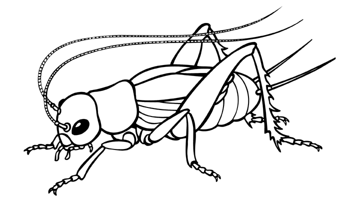 Cricket Insect Clip Art.