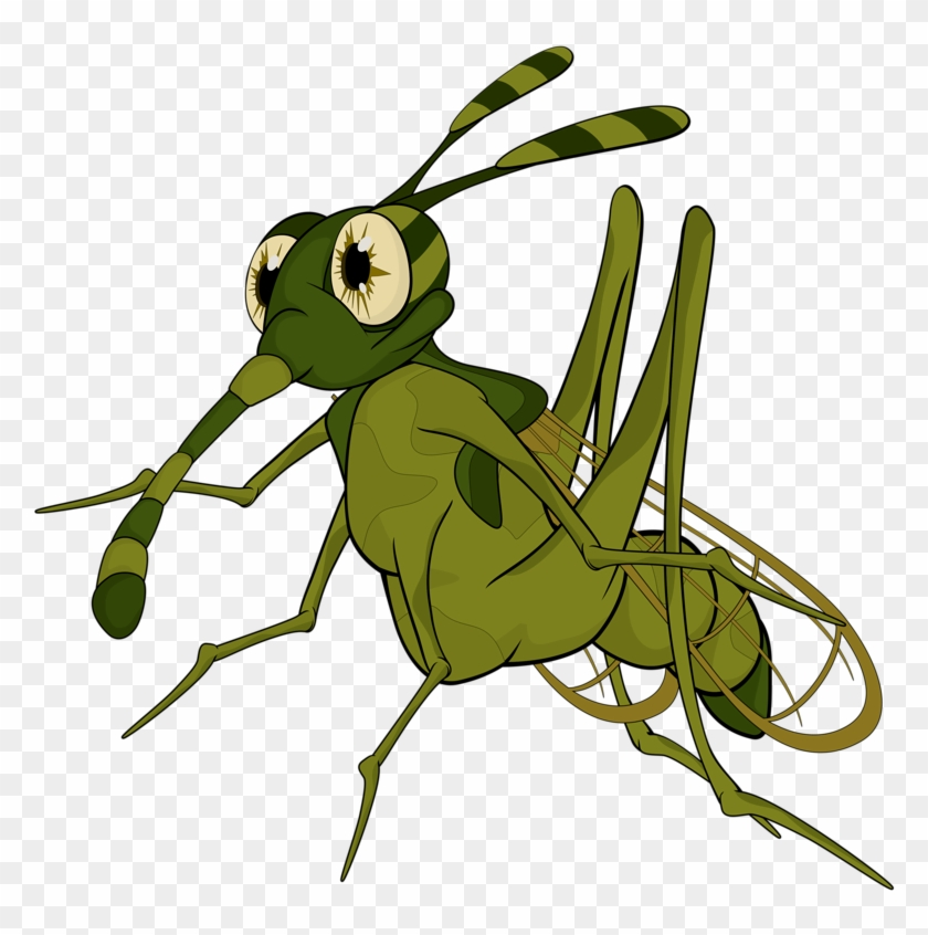 Insects Clipart Insect Grasshopper.