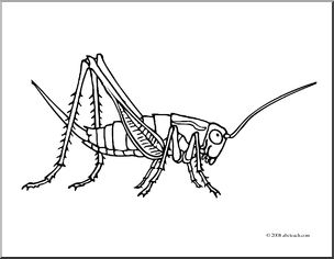 Clip Art: Insects: Cricket (coloring page) I abcteach.com.