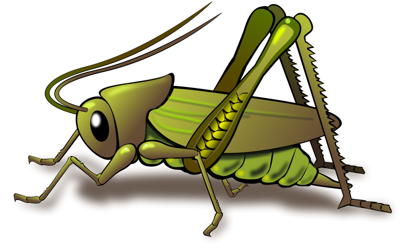 Cricket Insect Clipart.