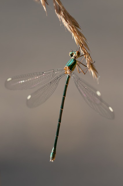 Free photo Flight Insect Animal Dragonfly Red Insect.