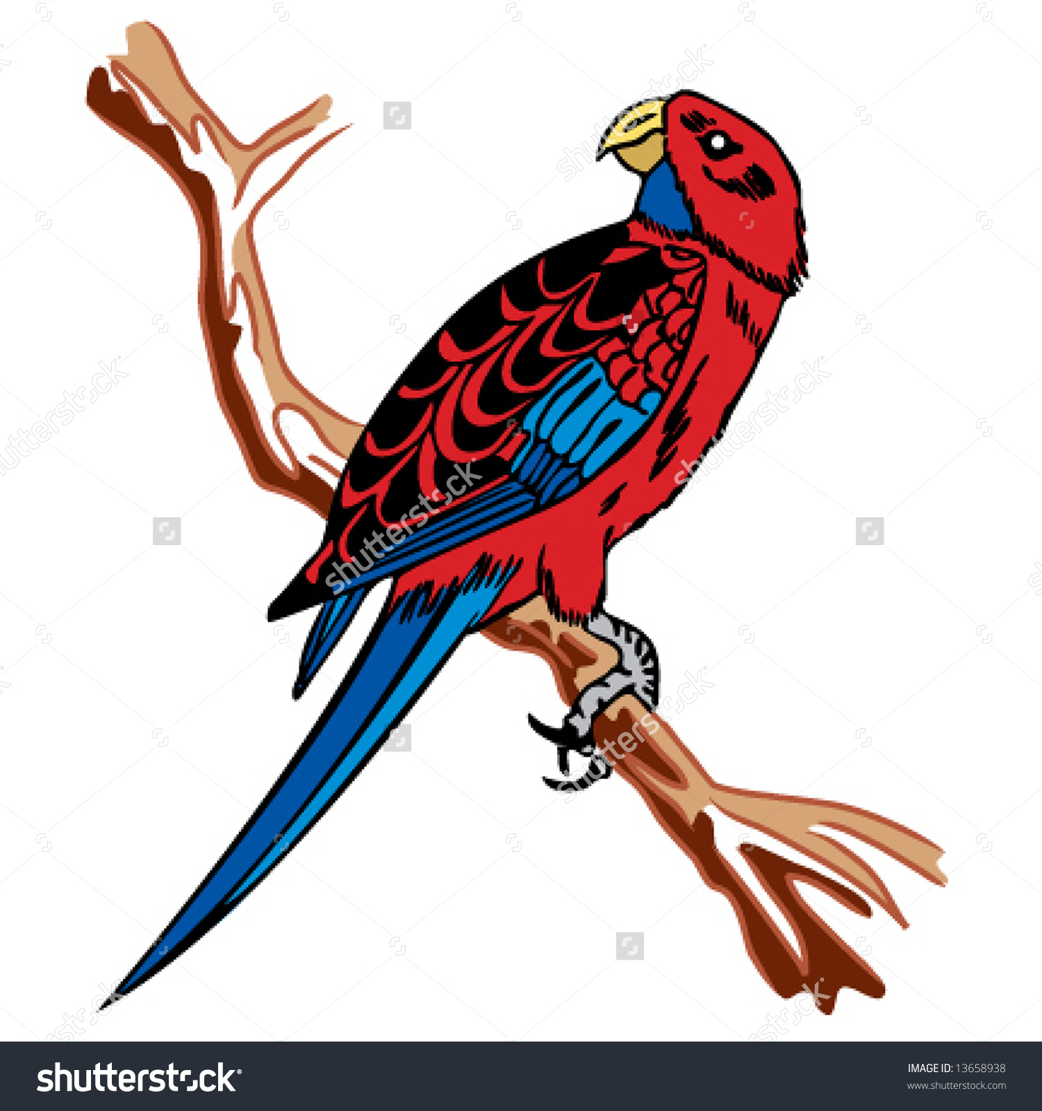 Crimson Rosella Stock Vector 13658938.