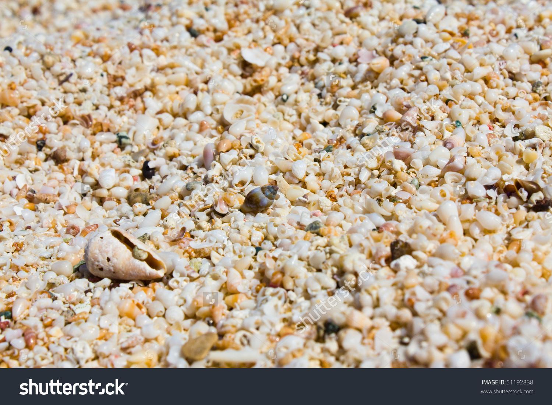 Seashells Background Chrissi Island Crete Stock Photo 51192838.