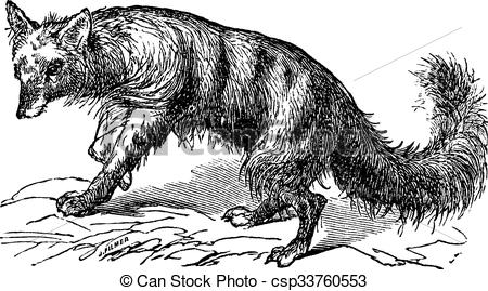 Clipart Vector of Aardwolf or Proteles cristatus vintage engraving.