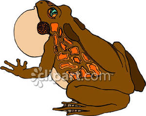 Brown_Toad_Croaking_Royalty_Free_Clipart_Picture_090222.