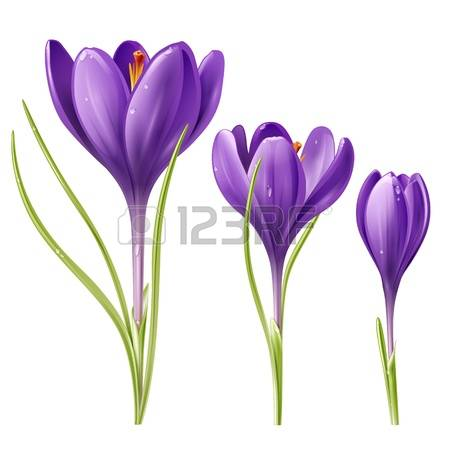 2,401 Crocus Stock Illustrations, Cliparts And Royalty Free Crocus.