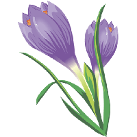Download Crocus Free PNG photo images and clipart.