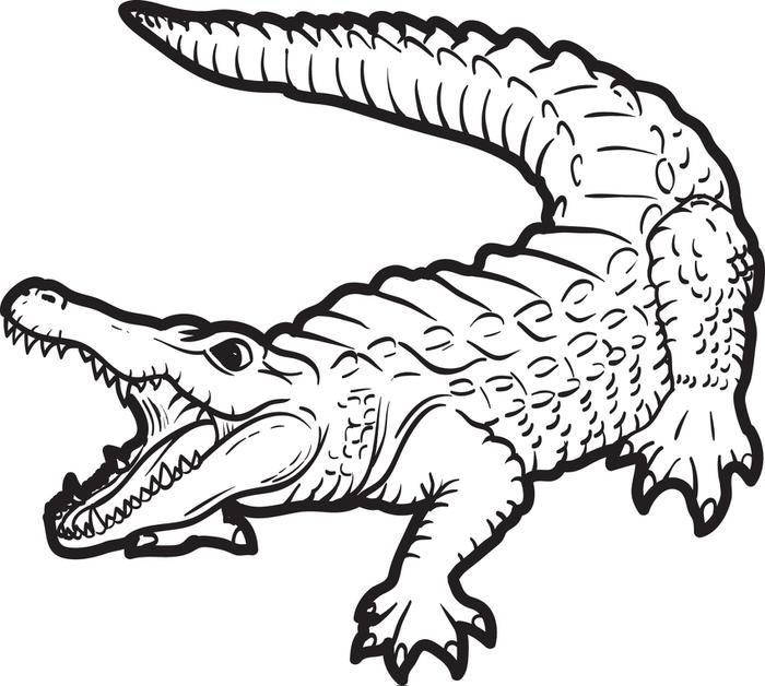 Crocodile Clipart Black And White.