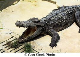 Crocodile farm Stock Photo Images. 1,367 Crocodile farm royalty.