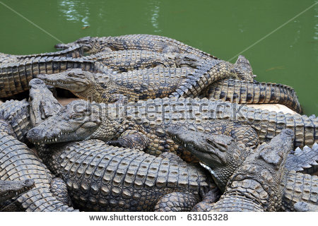 Crocodile Farm Stock Photos, Royalty.