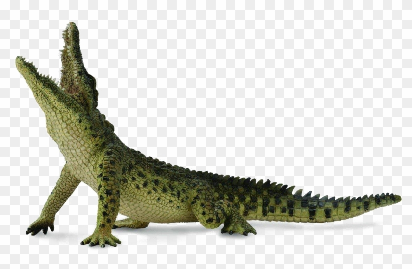 Crocodile Transparent Image.