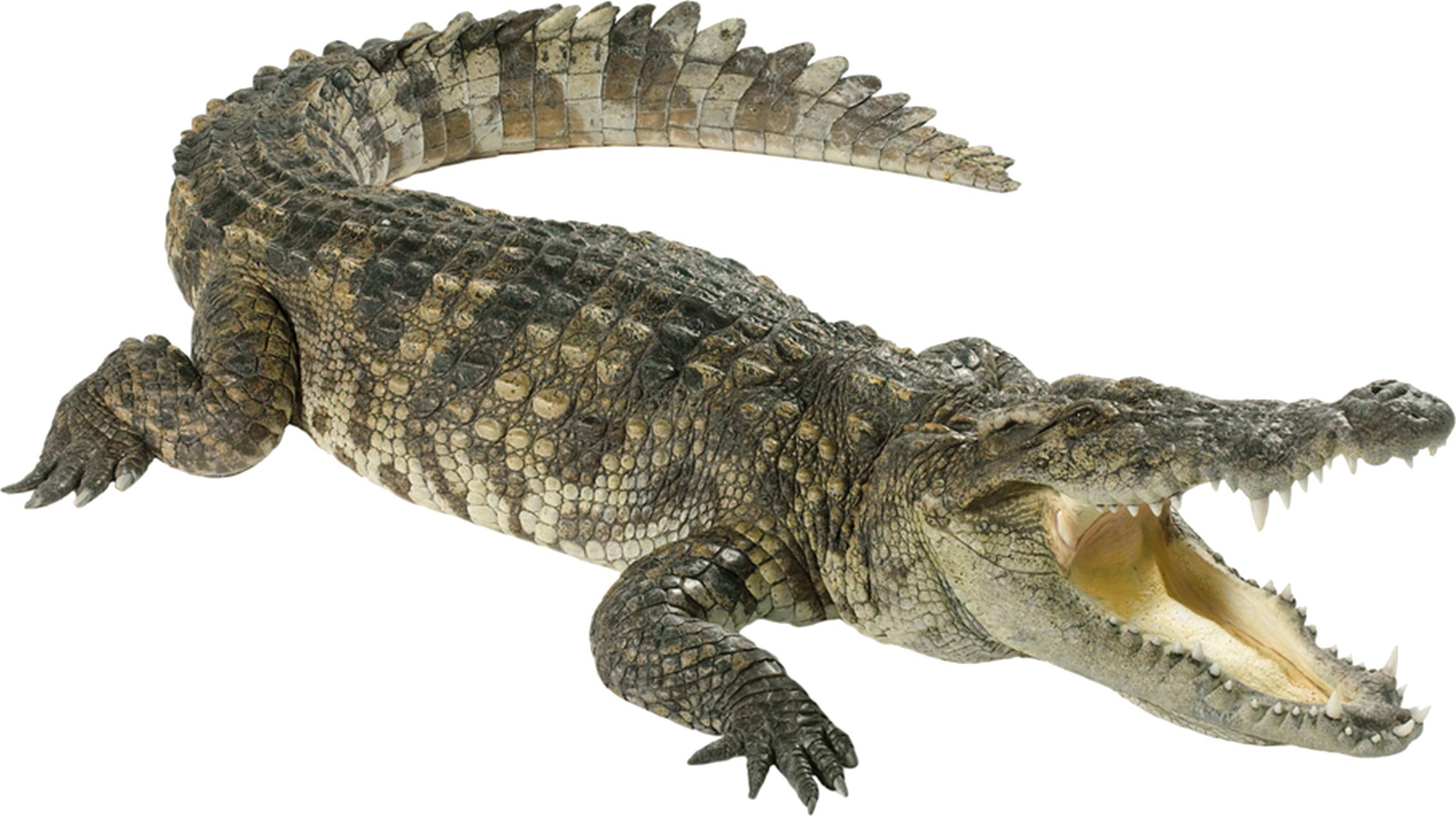 Green Crocodile PNG Image.