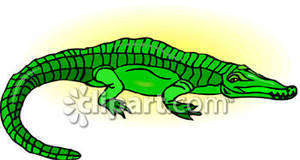 Green Crocodile.