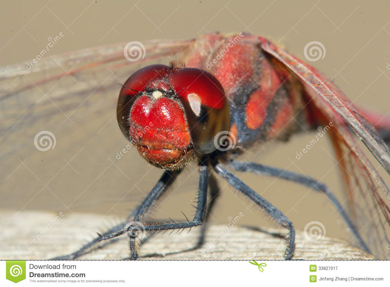 Red Dragonfly Royalty Free Stock Photography.
