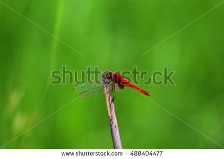 Dragonfly Stock Photos, Royalty.