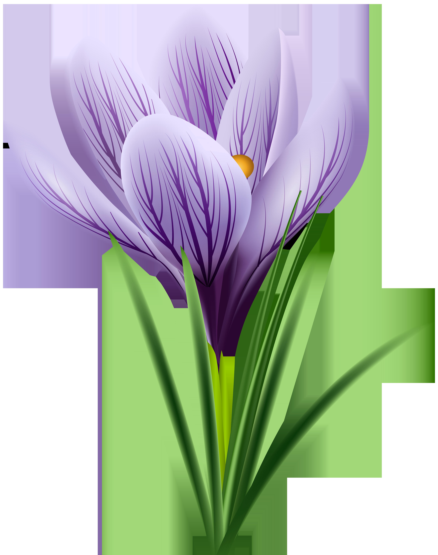 Purple Crocus Transparent PNG Clip Art Image.