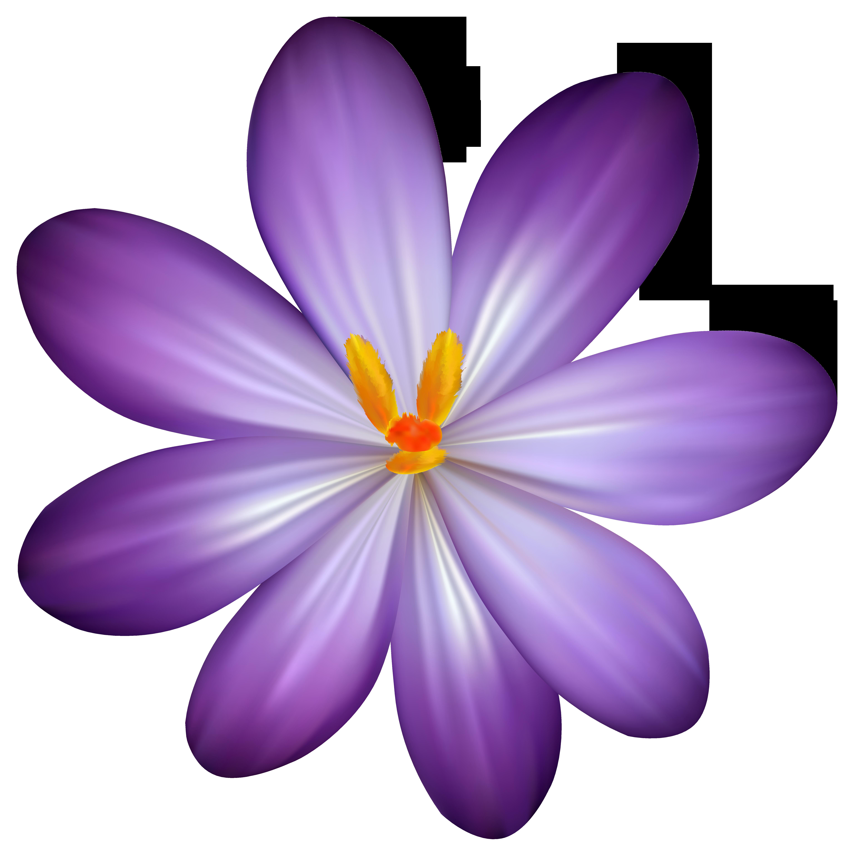 Purple Crocus Clip Art.