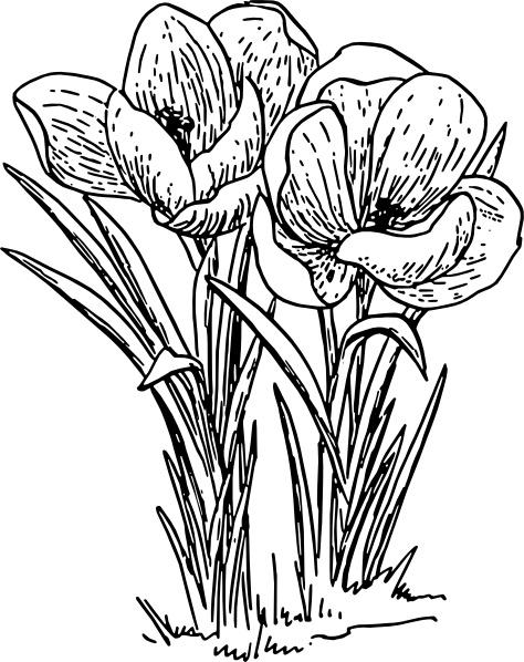 Rose Flower Crocus clip art Free vector in Open office drawing svg.