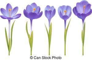 Saffron crocus Clipart and Stock Illustrations. 332 Saffron crocus.